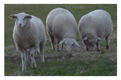 Should Lamb definition change?