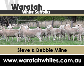 Waratah-AWSA-website-Ad-Dec-2018