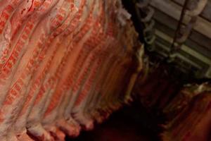 Carcase grading for MSA lamb