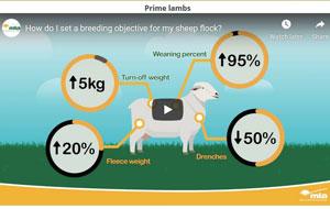 Breeding-Objectives-300
