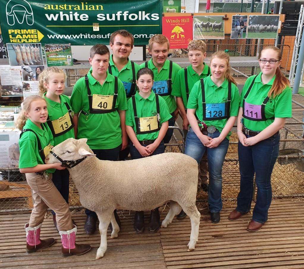 White Suffolk participants at the 2018 SA Sheep Expo