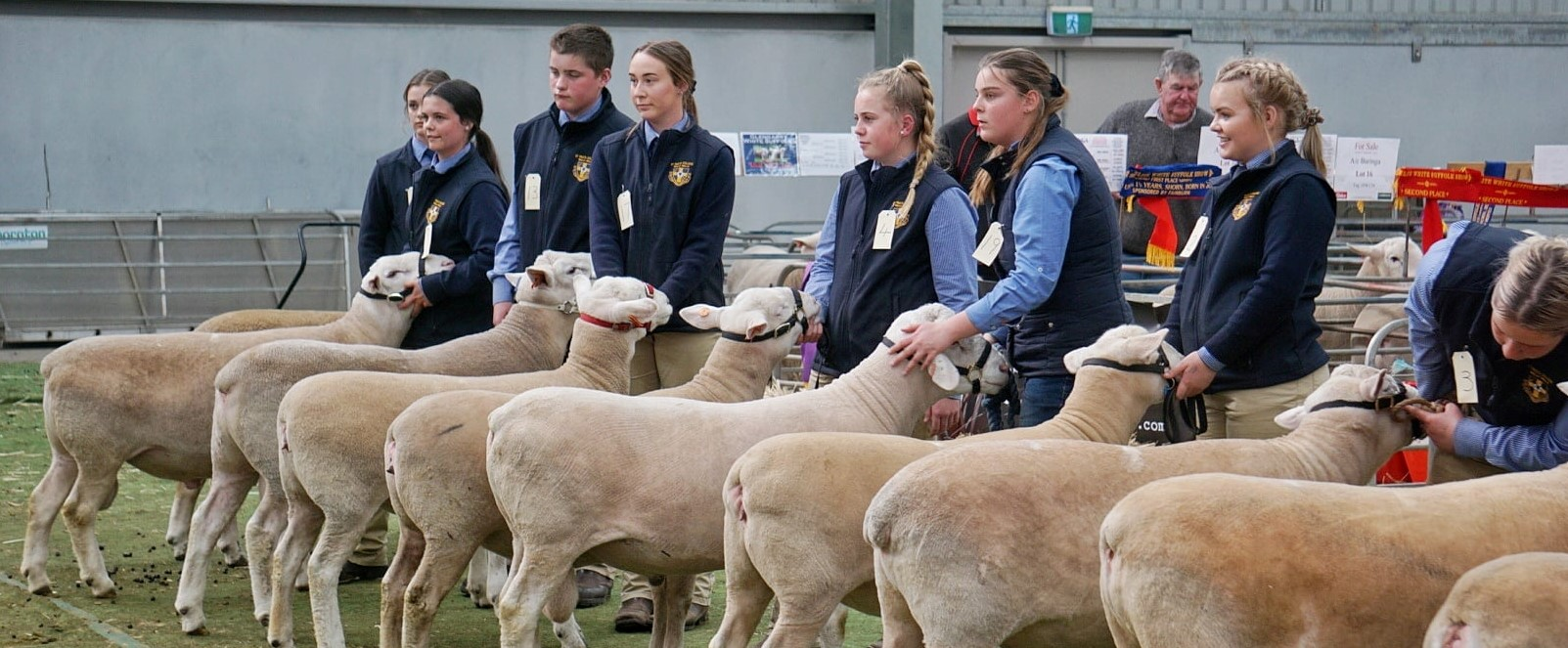 The lineup of youth during the 2019 Elite White Suffolk Show & Sale junior handler competition.