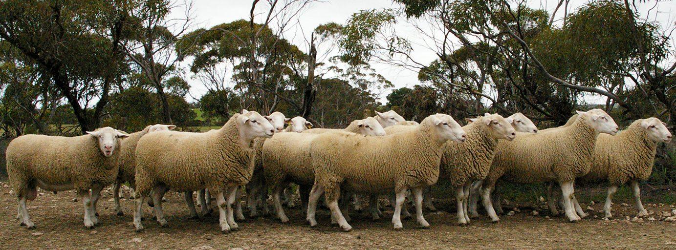 allansue@illoura.com.au