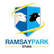 Ramsay Park White Suffolk Stud