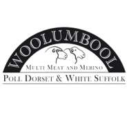 Woolumbool White Suffolk Stud